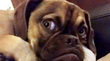 earl_grumpy_puppy_17